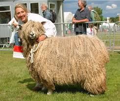 Che tipo di lana è questa ?